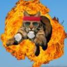 Ballistic Bobcat