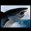 Sharkeran